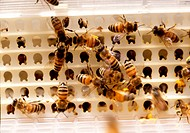 insect, animal, anthropoda, anthropods, arthropod, insects, beehive