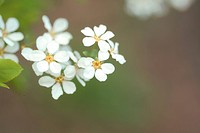 Blossom, plants, bloom, flowers, flower, plant (thumbnail)