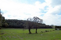 field, tree, sky, landscape, scenery, nature