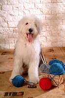 pose, domestic, house pet, canines, sheepdog, old english sheepdog