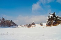 Background, snow, snowfield, snowy, winter, landscape, tree (thumbnail)