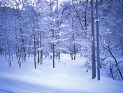 Snow, snow scene, tree, season, winter, winter scene (thumbnail)