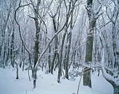 Season, scenery, grove, tree, snow, winter, nature (thumbnail)
