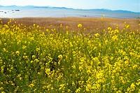 plants, scenery, plant, flower, field, flowers, nature