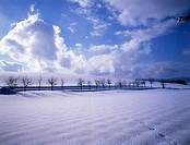 snow, snow scene, tree, season, winter, sky, winter scene