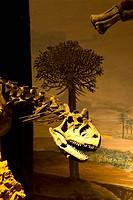 Egidio Feruglio Museum of Paleontology, Trelew, Patagonia, Argentina