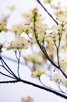 Close up of white and purple flowers on tree