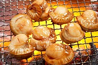 Scallop (thumbnail)