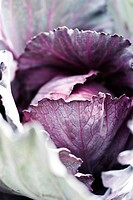 Purple cabbage, extreme close_up