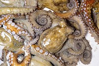 Common octopus (thumbnail)