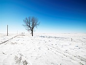 Tree in snow covered landscape with blue sky in background