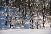 Barren snow covered trees in winter