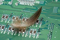Feather and circuit board
