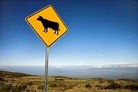 Cow crossing road sign in Haleakala National Park, Maui, Hawaii