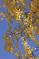 Bending, Branch, Close_Up, Day, Golden