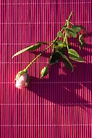 Curtain, Flower, Indoors, Leaf
