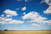 Calm, Clouds, Cloudy, Day, Field