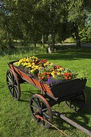 Blooms, Blossom, Cart, Flowers