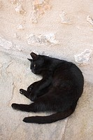 Black, Domestic Animals, Day, Cat, Adult Animal
