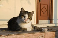 Cat, Day, Domestic Cat, Door, Doorstep