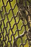 Close_Up, Design, Field, Intertwined, Interwoven
