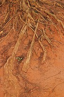 branching, close_up, arid