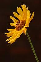 stamen, petal, grow, close_up, natured, wild