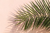 Close_Up, Colored Background, Day, Frond, Green