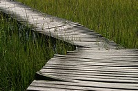 crops, vegetation, wild, bridge, walkway, path