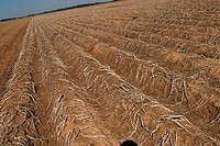 field, cultivated, outdoors, daytime, barren, arid