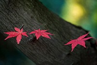 Autumn nature (thumbnail)