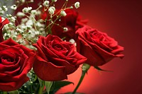 Close_up of bouquet of red roses with baby's breath against red background