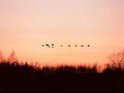 scenery, landscape, bird, sky, dusk, sunrise, nature