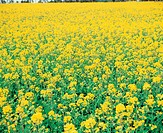 Bloom, flower, flowers, plants, field, blossom, plant (thumbnail)