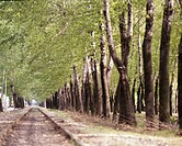 season, landscape, tree, railway, scene, spring, nature