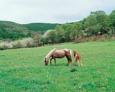 vertebrate, horse, scenery, nature, animal, film