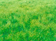 nature, grass, field, landscape, scenery, plant