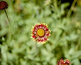 multi_color flowers, nature, flowers, flower, scene, wildflower, landscape