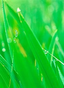waterdrop, grass, plants, plant, film