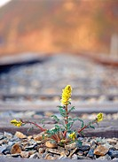 plant, railroad, nature, spring, season, film