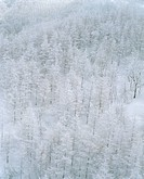 Scenery, scenic, snow-covered, snow, plant, tree (thumbnail)