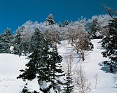 winter, landscape, snow, forest, mountain, snowscape, nature