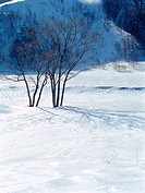mountain, nature, tree, snow, scenery, cold, winter