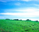 field, sky, landscape, scenery, cloud, grass