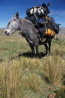 Mule, trip, sky, Blue, Fauna, Summer, Adventure (thumbnail)