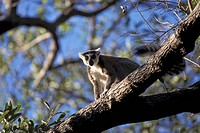 Tree, Fauna, Adventure, trip, Tight, shot, Monkey (thumbnail)