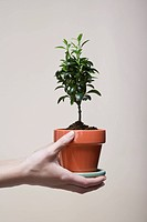 Woman's hands holding potted plant close_up