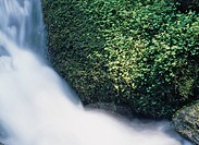 Plants By Waterfall