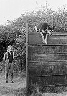 Seventies, black and white photo, sports, human and animal, dog sports, Local Championship 1972 for working dogs, trainer spures on his sheepdog who j...