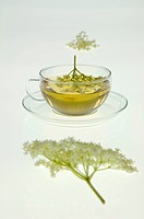 Elderflower tea, close_up